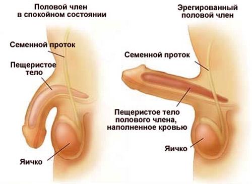 Импотенция у мужчин  причины признаки и лечение
