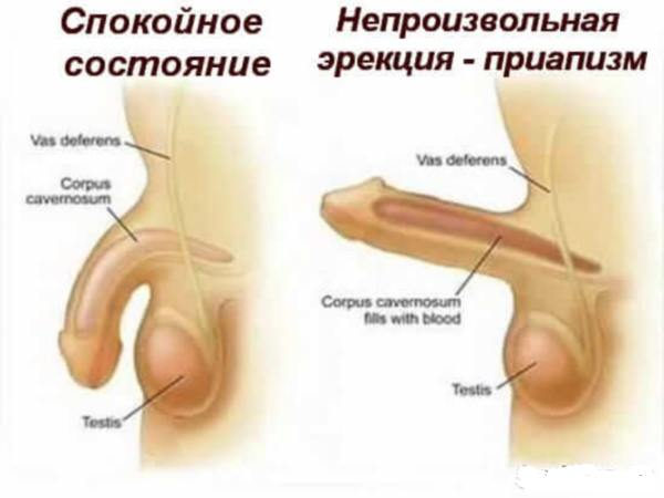 erektsiya-polovogo-chlena-smotret-paroli-ot-top-pornosaytov